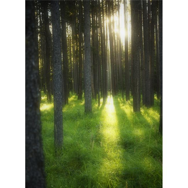 A Beautiful Wooded Area Poster Print by Kelly Redinger, 22 x 32 - Large - image 1 de 1