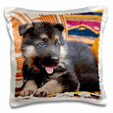 3dRose German Shepherd puppy dog on blankets - NA02 ZMU0125 - Zandria Muench Beraldo, Pillow Case, 16 by 16-inch (Sports Pocket Blanket Pillow)