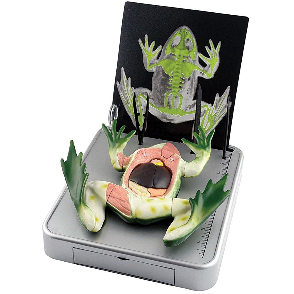 Elenco Simulated Frog Dissection Kit