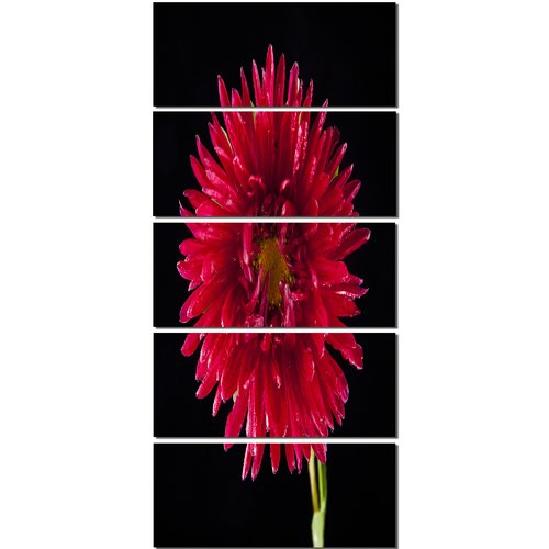 Design Art 'Chrysanthemum Flower on Black' 5 Piece Graphic Art on Wrapped Canvas Set