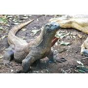LAMINATED POSTER Komodo Dragon Lizard Dragon Reptile Wildlife Wild Poster Print 24 x 36