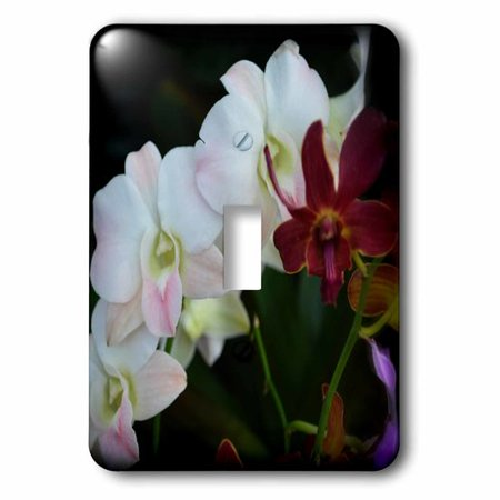 Beauty Stems - 3dRose Flow of Beauty is a photo of some beautiful blush orchid stem, Single Toggle Switch