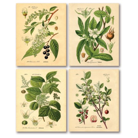 Gango Home Decor Popular Old-Fashioned Plant Botanical Wall Art by N. Harbick; Four Green 8x10in Unframed Paper Prints (Paper Only, No Frame) (Old Botanical Prints)