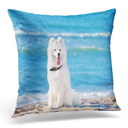 BOSDECO Blue White Dog Samoyed Sitting on The Beach Sea Beautiful Pillowcase Pillow Cover Cushion Case 16x16 inch - image 1 of 1