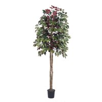 Vickerman 6' Artificial Capensia tree Set in Black Pot