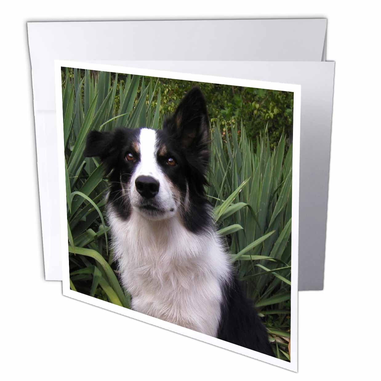3dRose border collie 2, Greeting Cards, 6 x 6 inches, set of 6