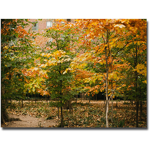 "Trademark Fine Art ""Backyard Color"" Canvas Wall Art by Ariane Moshayedi"