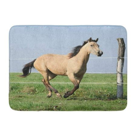 KDAGR Yellow Action Palomino Quarter Horse Running on Pasturage in Autumn Doormat Floor Rug Bath Mat 23.6x15.7 inch (Yellow Quarter Horse)