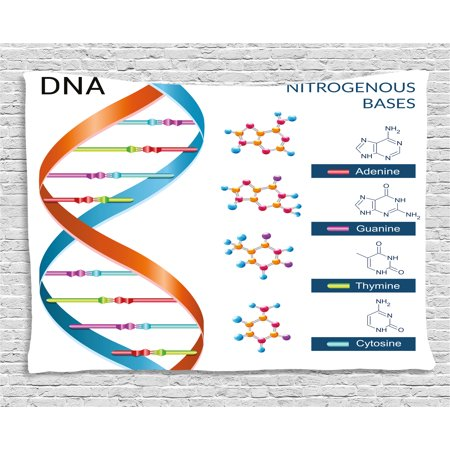 Educational Tapestry, DNA Bases Chemistry Biochemistry Biotechnology Science Spiral Symbol Genetic, Wall Hanging for Bedroom Living Room Dorm Decor, 80W X 60L Inches, Multicolor, by Ambesonne - Science Decor