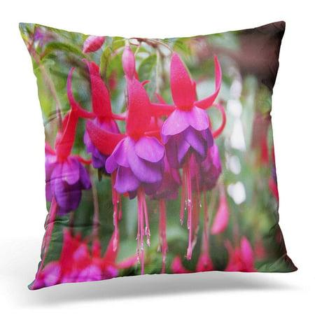 ECCOT Colorful Flower Pink and Purple Fuschia Green Fuchsia Pillowcase Pillow Cover Cushion Case 20x20 inch ()