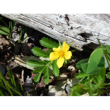 LAMINATED POSTER Field Nature Branch Yellow Wildflower Flower Poster Print 24 x 36