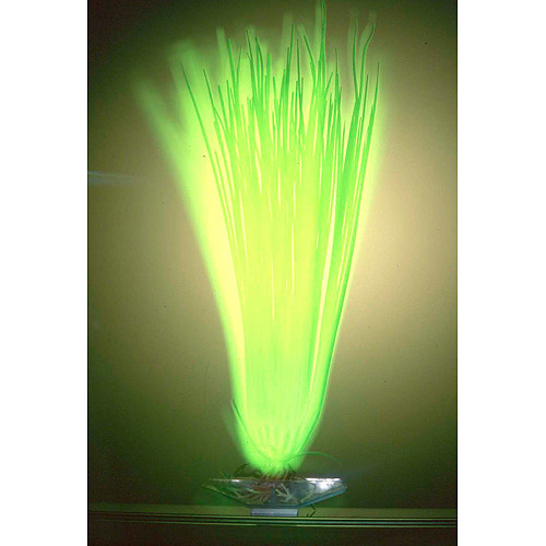 Penn Plax Aqua Culture Glow in the Dark Grass Aquarium Plant Decoration