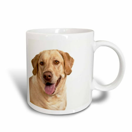 3dRose Oregon, Keizer, Labrador Retriever dog - US38 RBR0163 - Rick A. Brown, Ceramic Mug,