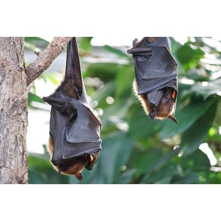 Framed Art For Your Wall Flying Fo Tropical Bat 10x13 Frame