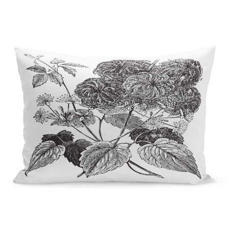 Virgin Vines (ECCOT Devil Darning Needles Hair Love Vine Traveller Joy Virgin Pillowcase Pillow Cover Cushion Case 20x30 inch )