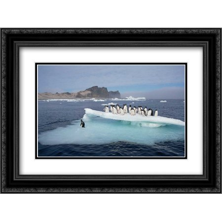 Adelie Penguins resting on ice floe, Possession Island, Ross Sea, Antarctica 2x Matted 24x18 Black Ornate Framed Art Print by De Roy,