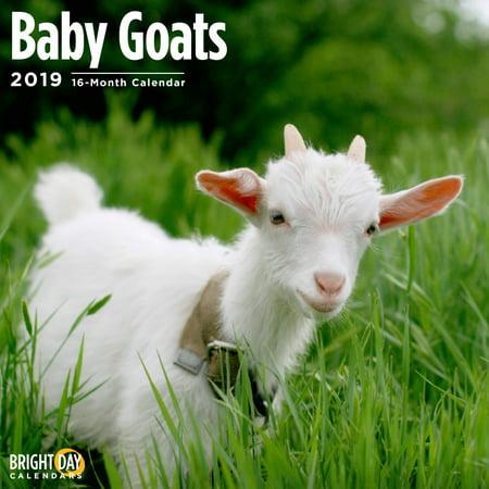 Baby Goats 2019 Wall Calendar 12 x 12 Inches Cute Animal Farm Fun Gift