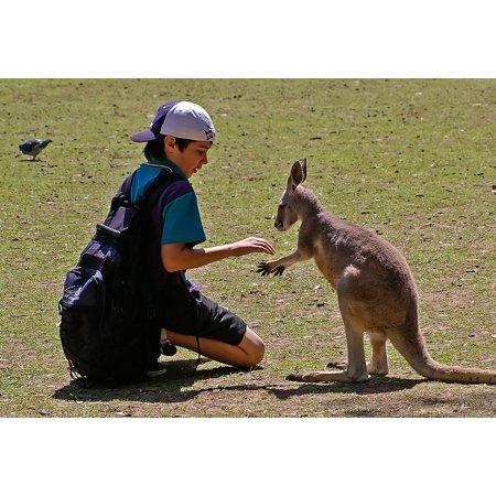 LAMINATED POSTER Meeting Boy Schoolboy Encounter Wallaby Kangaroo Poster Print 24 x - P Sherman 24 Wallaby Sydney