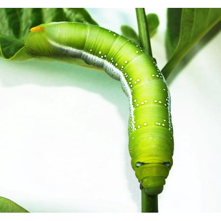 Canvas Print Worm Closeup Creepy Green Tree Wallpaper Stick Stretched Canvas 10 x - Creepy Halloween Wallpaper