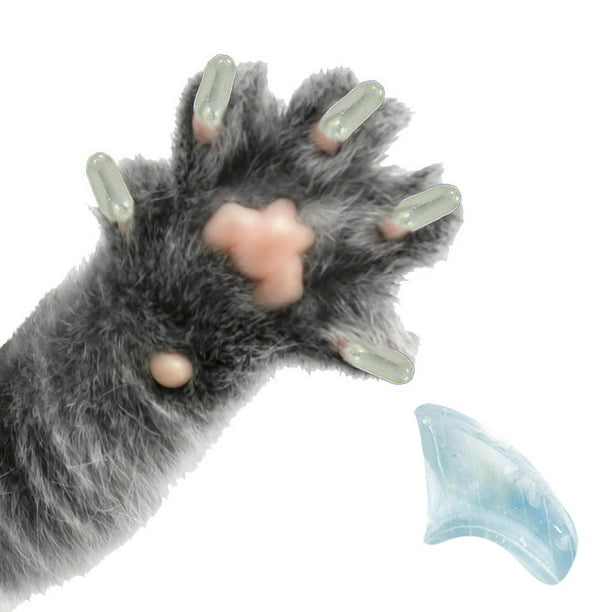 how to put caps on cats claws