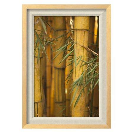 Bamboo ii framed wall art for Bamboo wall art