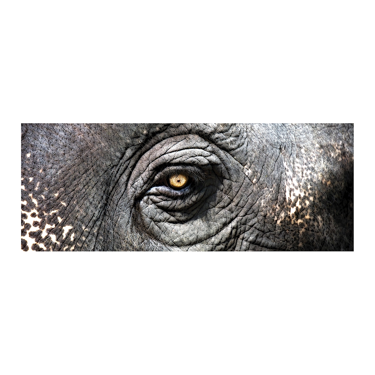 Exclusive Gianni Rusconi Print On Canvas - image 1 of 1