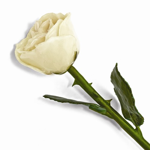 Lacquer Dipped Natural White Rose w/Green Leaves & Stem