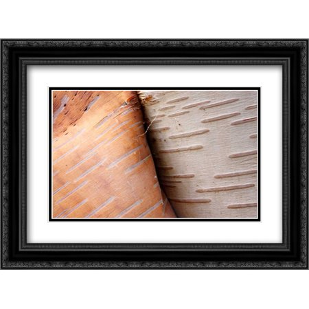 Paper Birch bark peeling, Cape Breton Highlands National Park, Nova Scotia, Canada 2x Matted 24x18 Black Ornate Framed Art Print by Leslie, Scott - Birch Bark Paper