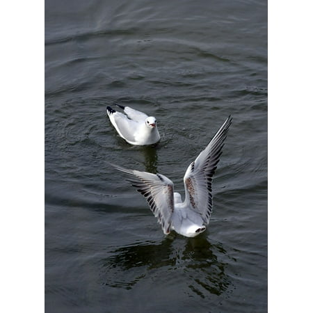 Canvas Print Seagulls Wings Flying Seagull Animal Flight Birds Stretched Canvas 10 x 14