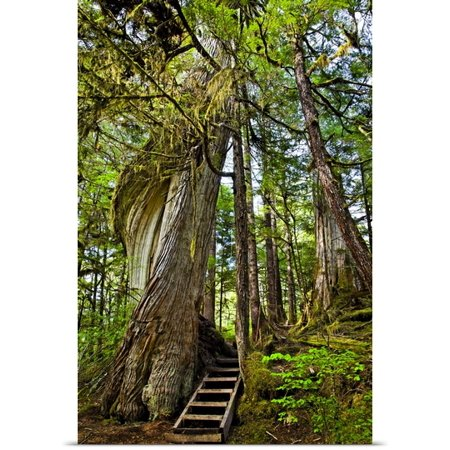 Great Big Canvas Sunny Awazahura Reed Poster Print Entitled Steps Lead Up Moss Draped Twisting Tree Along Lunch Falls Loop Trail