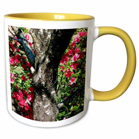3dRose Old Peach Tree, Peach tree trunk flanked by lovely Azaleas - Two Tone Yellow Mug,