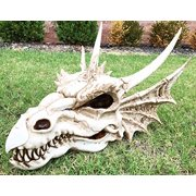 """Large 18"""" Long Erathia Elder Dragon Skull Fossil Statue Figurine Might and Magic For Medieval Dragon Era Fans Game of Thrones Lovers"""