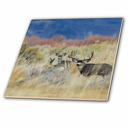 Do Ceramic Tile - 3dRose Mule Deer Buck with Does - Ceramic Tile, 12-inch