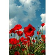 Field of Poppies Journal: 150 Page Lined Notebook/Diary