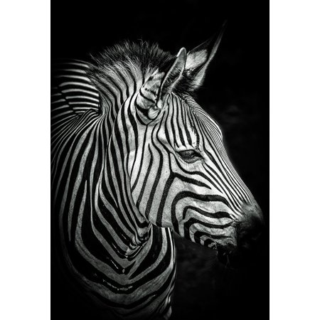 EAN 7439311839895 product image for Zebra 4 black and white Poster Print by European Master Photography European Mas | upcitemdb.com