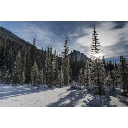 - Snow on the rugged Canadian Rocky Mountains and trees Yoho National Park Field British Columbia Canada Stretched Canvas - Keith Levit  Design Pics (38 x 24)