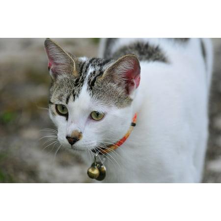 Canvas Print Animals Feline Pets Animal Child Pet Kitten Cat Stretched Canvas 10 x 14