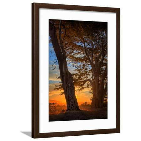 Magical Cypress Sunrise, Point Reyes National Seashore Framed Print Wall Art