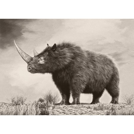 The woolly rhinoceros is an extinct species of rhinoceros that was common throughout Europe and northern Asia during the Pleistocene epoch and survived the last glacial period Poster