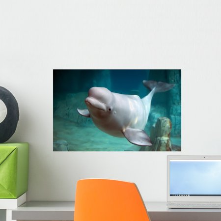 Beluga Whale Wall Mural by Wallmonkeys Peel and Stick Graphic (18 in W x 12 in H) - Whale Mural
