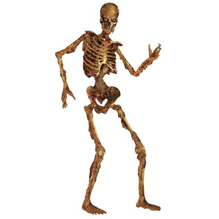 The Holiday Aisle Halloween Jointed Skeleton