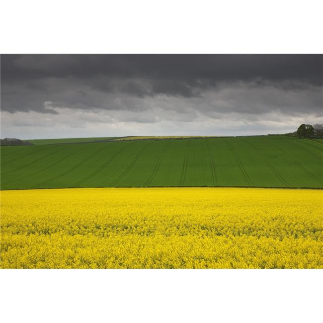 Posterazzi DPI1853889 Fields - North Yorkshire England Poster Print, 19 x 12 - image 1 of 1