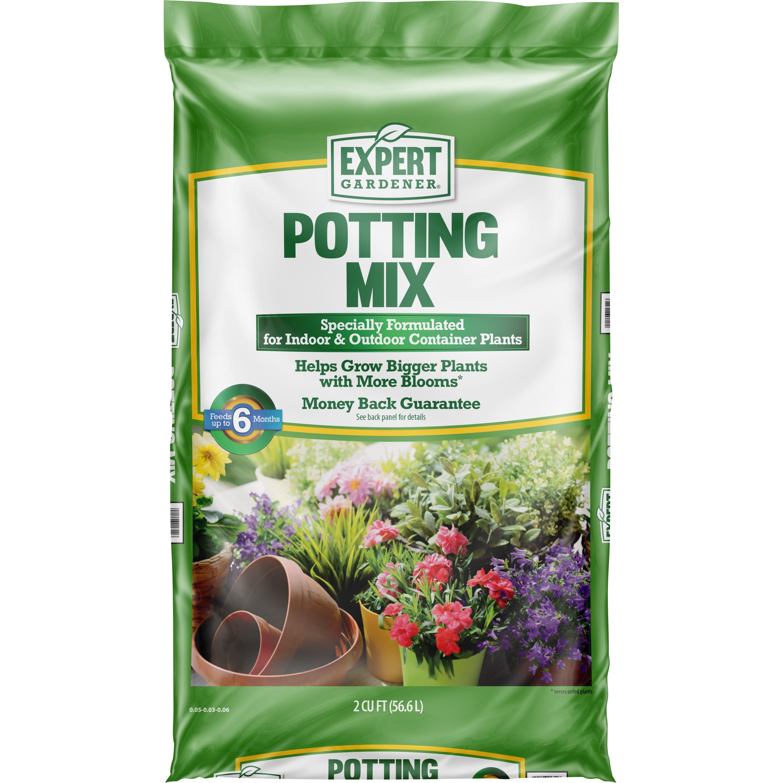 Golden 6 Quality Medium Plugs Plants Beetroot Plants