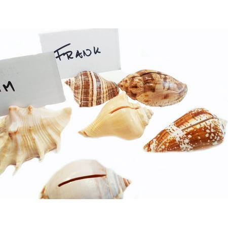 Set of 36 Genuine Seashell Place Card Holders Beach Wedding Favor Nautical Party Decor Sea Shell Table Sets - Nautical Place Card Holders