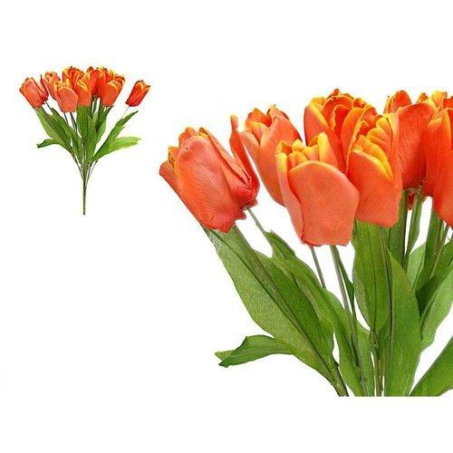 Hikari 56 Tulip Flowers