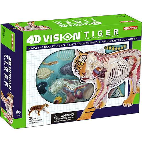 4D Vision Tiger Anatomy Model
