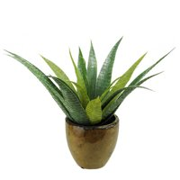 Northlight Seasonal Artificial Agave Succulent Desk Top Plant in Pot