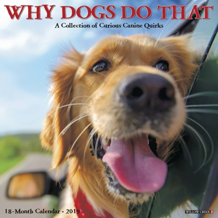 2019 Why Dogs Do That Wall Calendar, by Willow Creek (Dot Calendar)