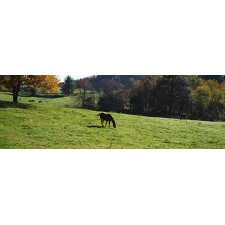 Horses grazing in a field Kent County Michigan USA Poster Print](Halloween Usa Stores In Michigan)