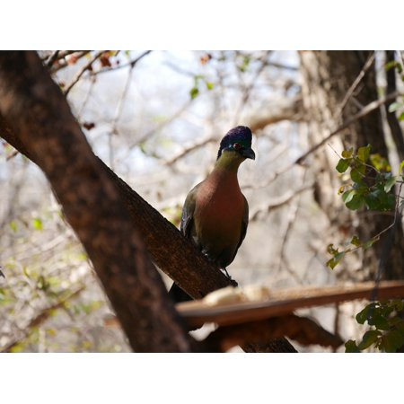 Canvas Print Nature Wildlife Photography Animals African Bird Stretched Canvas 10 x -